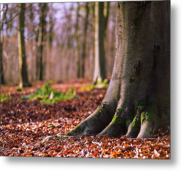 Metal Print featuring the photograph Forest Floor by Will Gudgeon