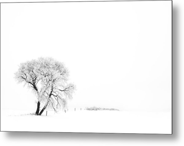 Frozen Morning Metal Print