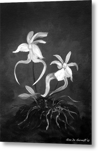 Ghost Orchids Metal Print
