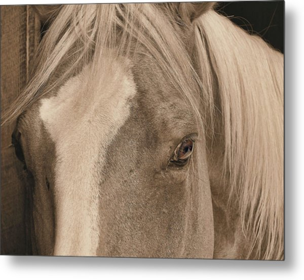 Golden Palomino Metal Print by JAMART Photography