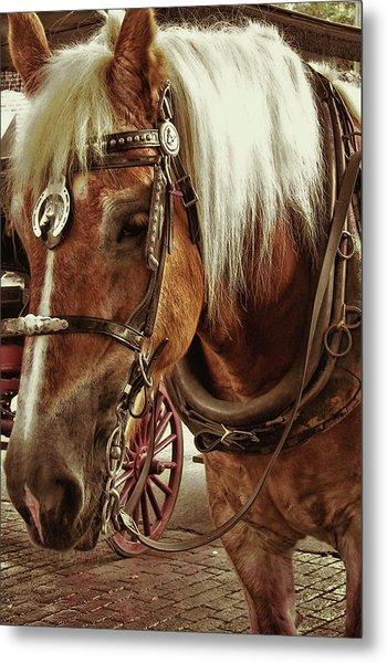 Haflinger Pony Metal Print by Dressage Design
