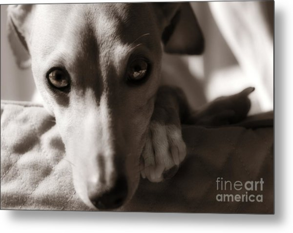 Heart You Italian Greyhound Metal Print
