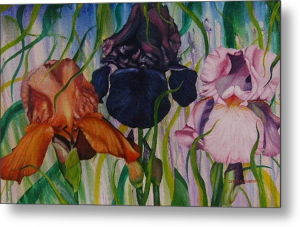 I Thought Tulips Metal Print by Shahid Muqaddim