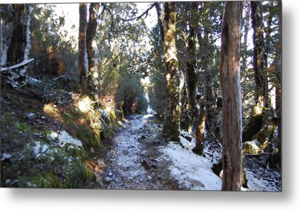 King Billy Forest Cradle Mountain Metal Print by Sarah King
