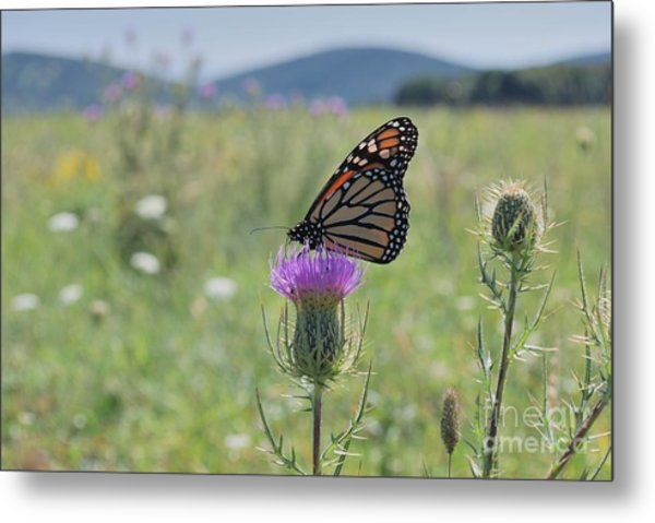 Mountain Meadow Monarch Metal Print