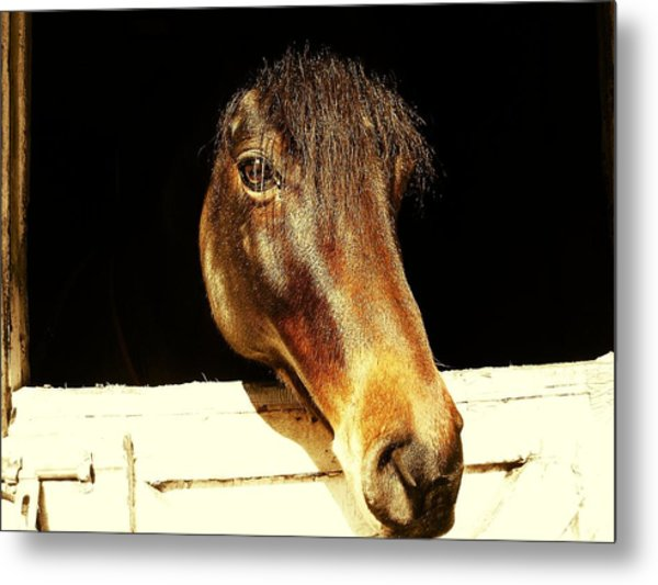Noble Stallion Metal Print by JAMART Photography