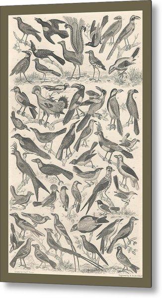 Ornithology Metal Print