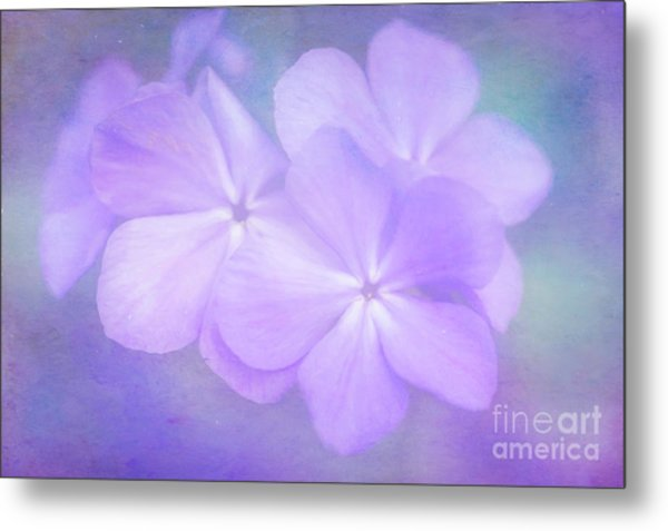 Phlox In The Evening Light Metal Print
