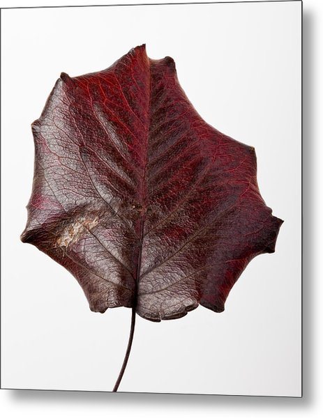 Red Leaf 4 Metal Print by Robert Ullmann