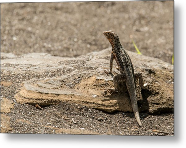 Santiago Lava Lizard Metal Print by Harry Strharsky