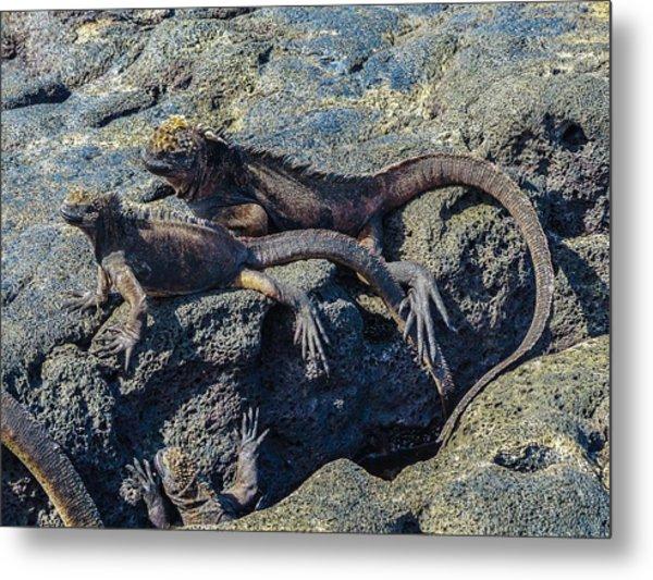 Santiago Marine Iguana Metal Print by Harry Strharsky