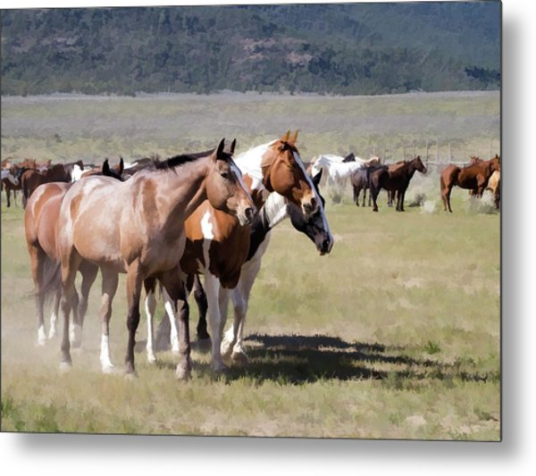 Metal Print featuring the digital art Sombrero Ranch Horse Drive, An Annual Event In Maybell, Colorado by Nadja Rider