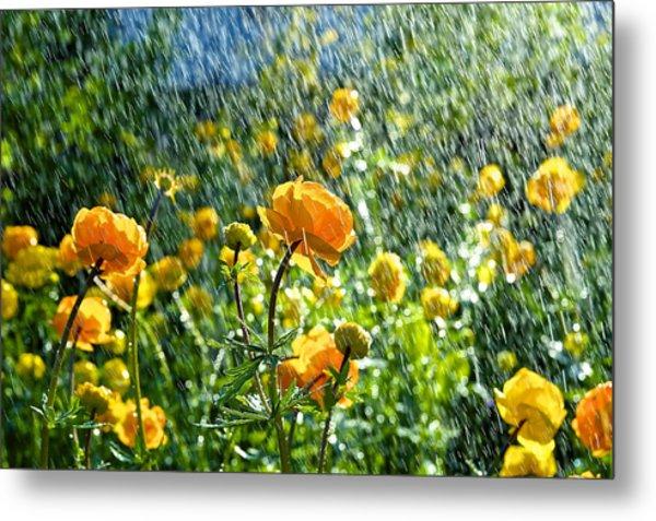 Spring Flowers In The Rain Metal Print