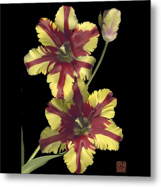 Tulip Metal Print by Lloyd Liebes