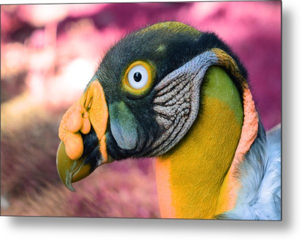 Metal Print featuring the photograph Vulture by Artistic Panda