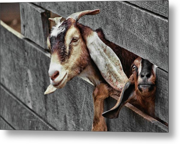 What's Going On? Metal Print by JAMART Photography