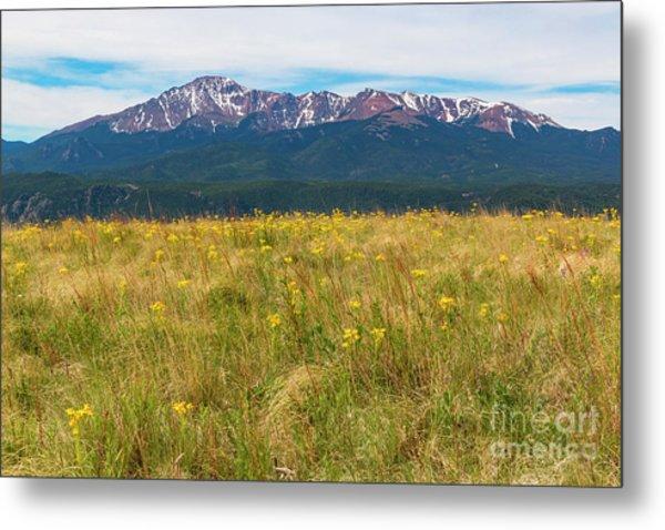 Wildflowers And Pikes Peak Metal Print