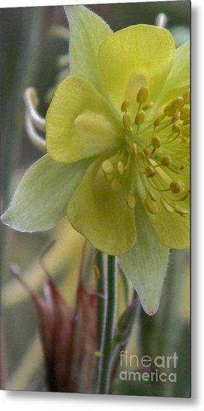 Yellow Flower 4 Metal Print