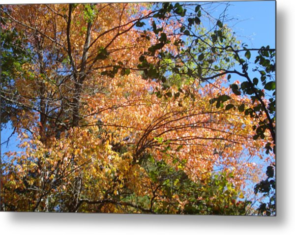 Autumn In Ma Metal Print by Victoria Wang