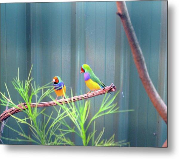 Aussie Rainbow Lovebirds Metal Print