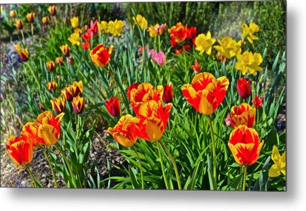 2015 Acewood Tulips 1 Metal Print