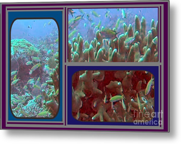 2015 Periscope Perspective Gallery Underwater Coral Reef Vegitation Photography In Landscape Format Metal Print