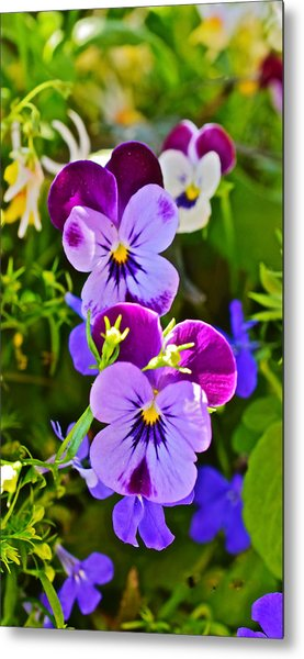 2015 Summer's Eve At The Garden Pansy Totem Metal Print