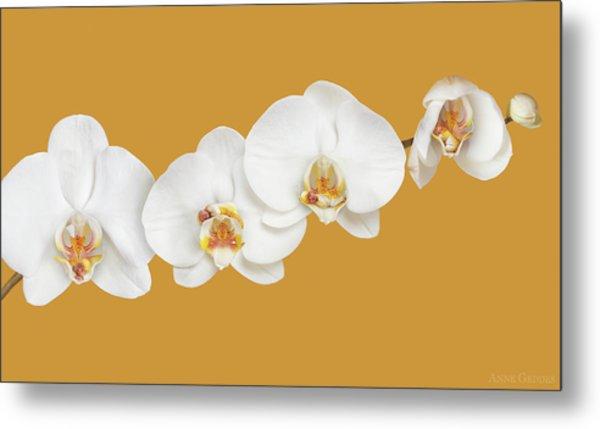Moth Orchid Nursery Metal Print