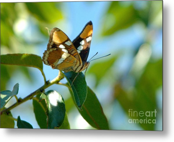 Butterfly Metal Print by Marc Bittan