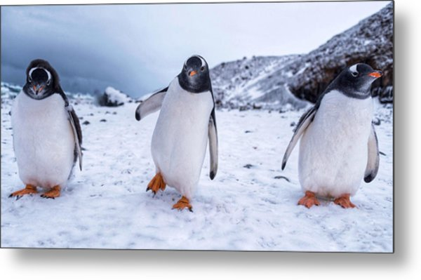 Metal Print featuring the photograph 3 Amigos by Rand