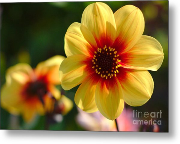 Autumn Flowers Metal Print
