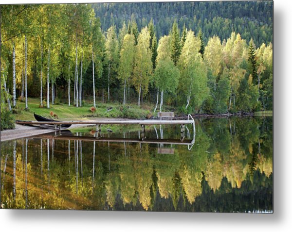 Birches And Reflection Metal Print