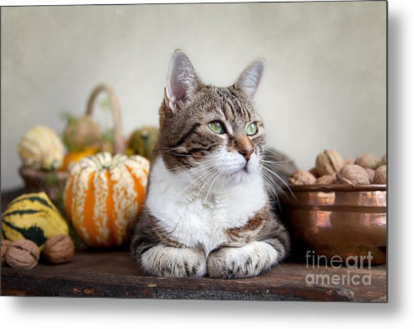 Cat And Pumpkins Metal Print