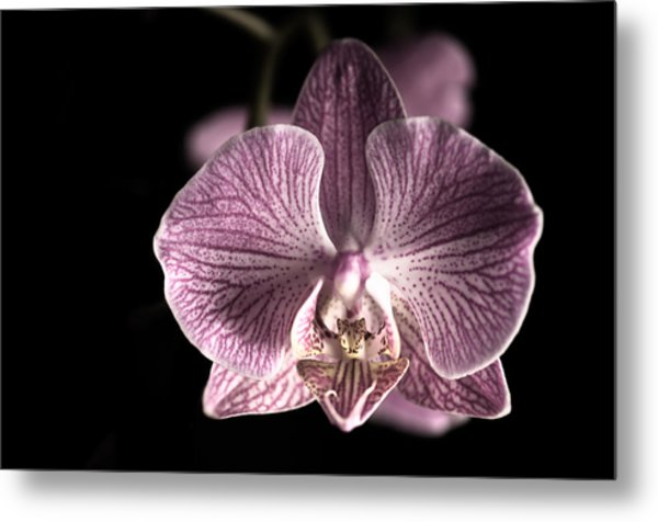 Close Up Shoot Of A Beautiful Orchid Blossom Metal Print