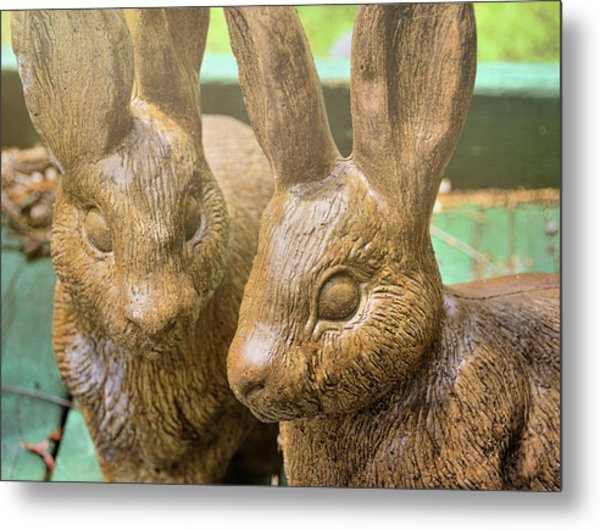Garden Cottontails  Metal Print by JAMART Photography