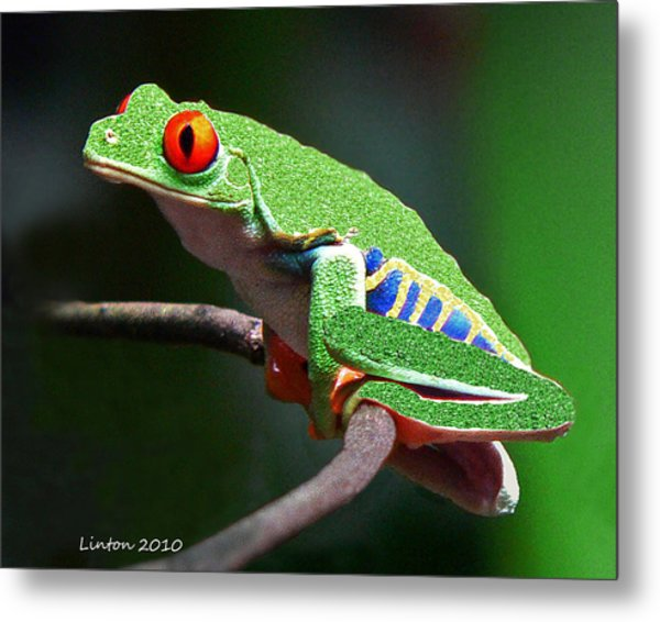 Red-eyed Leaf Frog Metal Print by Larry Linton