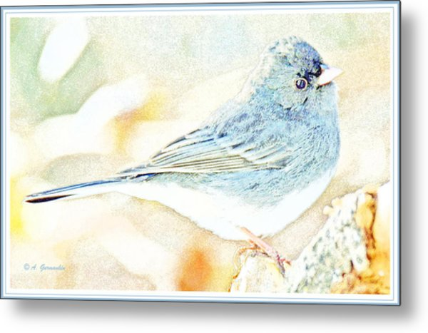 Slate-colored Junco, Snowbird, Male, Animal Portrait Metal Print