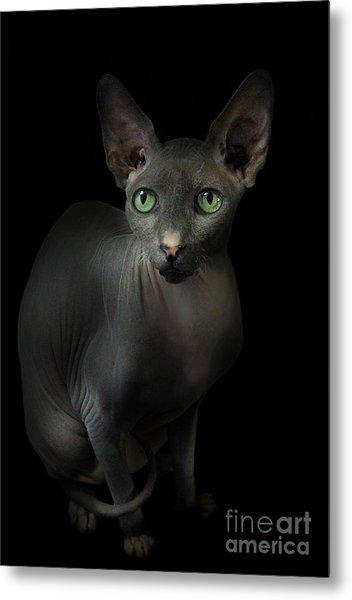 Sphynx Cat Portrait Metal Print