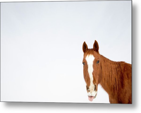 The Horse Collection #1 Metal Print