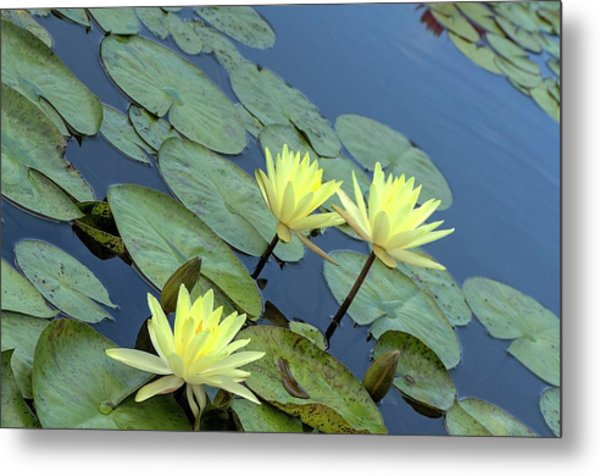 3 Yellow Metal Print