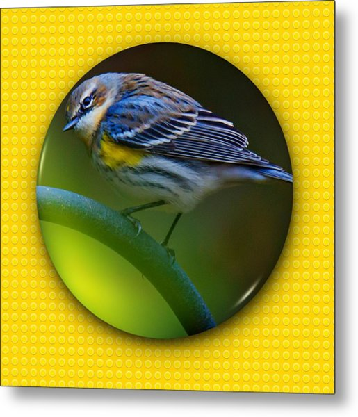 Metal Print featuring the photograph Yellow-rumped Warbler by Robert L Jackson