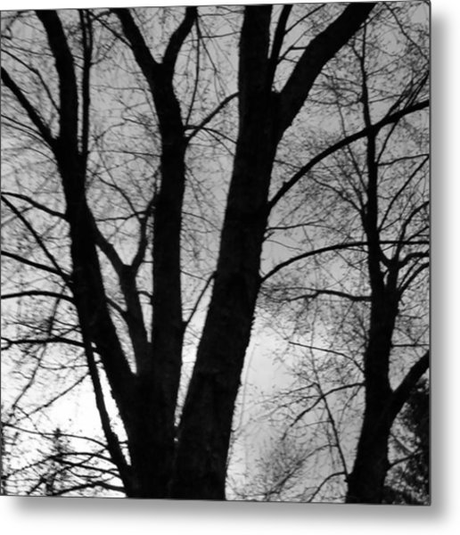 Black And White Tree Metal Print