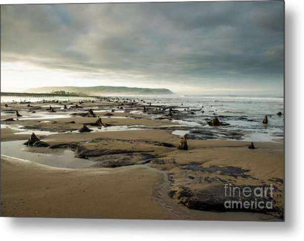 Bronze Age Sunken Forest At Borth On The West Wales Coast Uk Metal Print