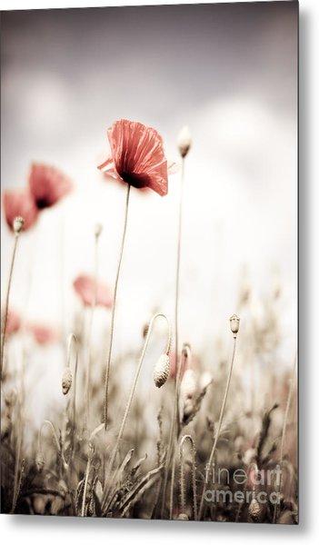 Corn Poppy Flowers Metal Print