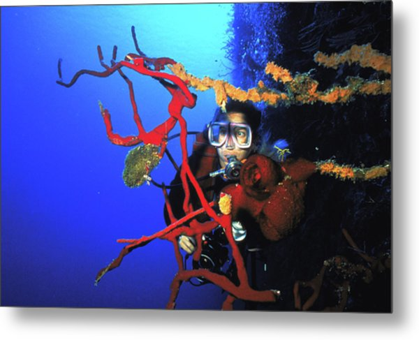 Diving The Wall At Little Cayman Metal Print by Carl Purcell