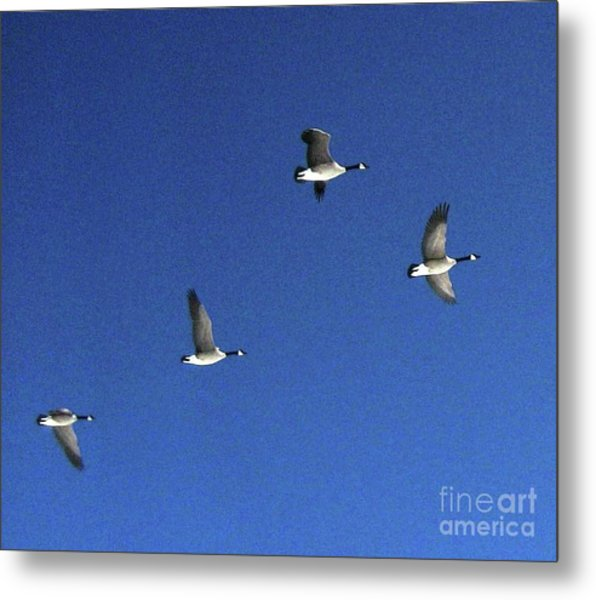 4 Geese In Flight Metal Print