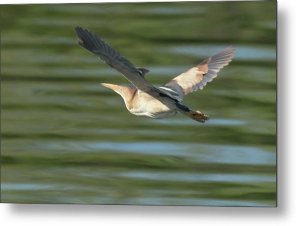 Least Bittern Metal Print