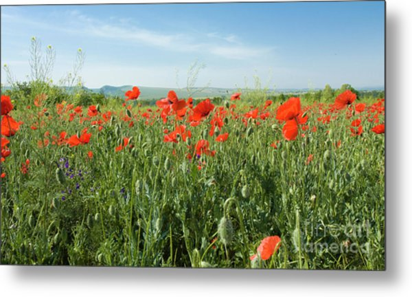 Meadow With Red Poppies Metal Print
