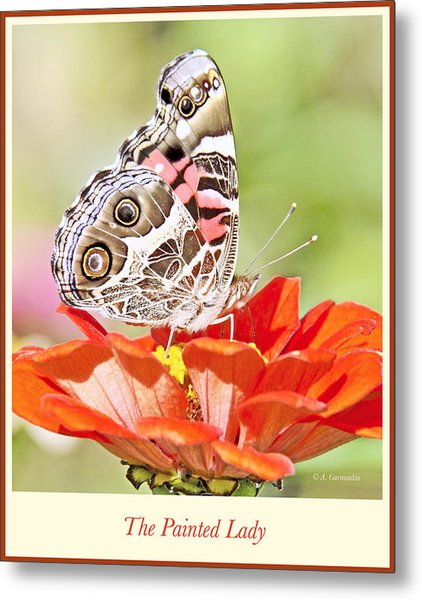 Painted Lady Butterfly On Zinnia Flower Metal Print