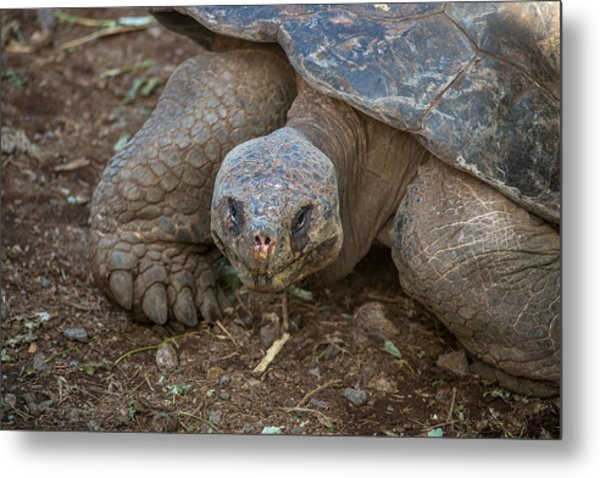 Santa Cruz Tortoise Metal Print by Harry Strharsky